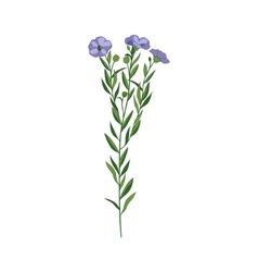 Flax Wild Flower Hand Drawn Detailed vector image vector image