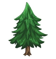 Coniferous pine tree Christmas symbol vector image