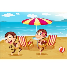 A beach with two monkeys vector image