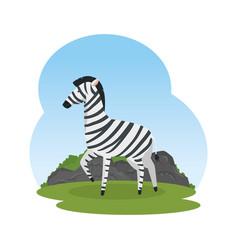 African zebra in the savannah vector