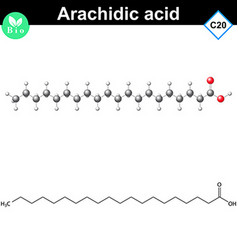 Arachidic fatty acid atomic structure vector