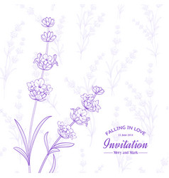 bunch lavender flowers vector image