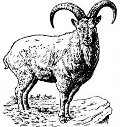 Torus coucasica vector