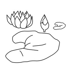 water lily colouring page vector image