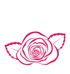 Rose hand drawen style isolated on white vector image