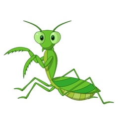Cute praying mantis cartoon vector image vector image