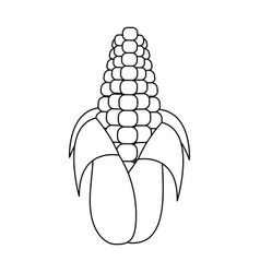 Isolated corn design vector