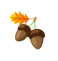 Leaf with hanging acorns isolated icon vector