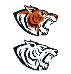 Tiger mascot head of angry isolated vector