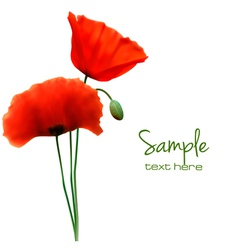 red poppy card vector image vector image