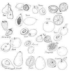 hand drawn fruits set vector image vector image
