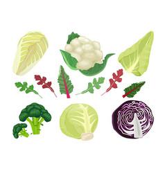 cabbages cartoon green vegetarian natural food vector image