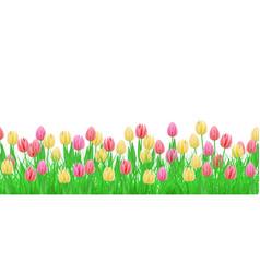 green grass tulip flowers border frame vector image