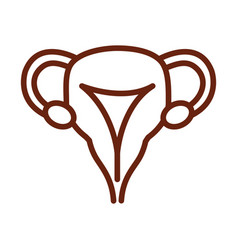human body female reproductive system anatomy vector image