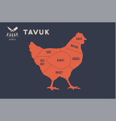 Meat cuts poster butcher diagram - tavuk vector