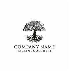 tree oak banyan leaf and root logo design vector image