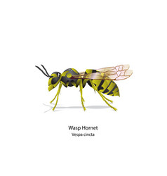 warp hornet bee on white background vector image