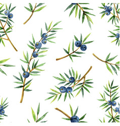 Watercolor seamless pattern of plants juniper vector