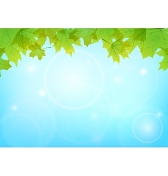 maple leaves and blue sky vector image