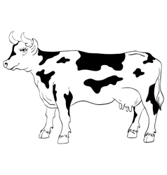 cow isolated on a white background vector image vector image