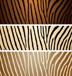 zebra variation vector image vector image
