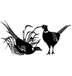 Bird pheasant vector