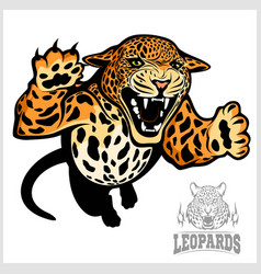 Leopard - isolated on white vector