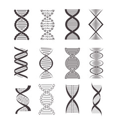 silhouette black dna icon set vector image