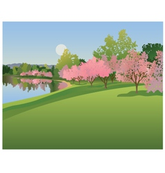 Lake with cherry blossoms vector image