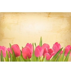 Valentines day background Beautiful tulip flowers vector image vector image