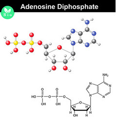 Adenosine diphosphate chemical structure and model vector
