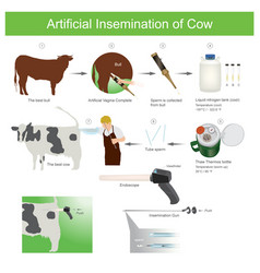 Artificial insemination cow artificial vector