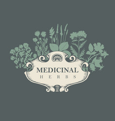 Banner for medicinal herbs in retro style vector
