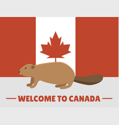 Brown beaver animal character mammal on canada red vector