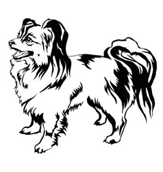 Decorative standing portrait of dog papillon vector