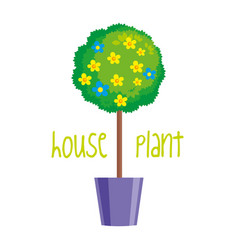 house plant on white background vector image