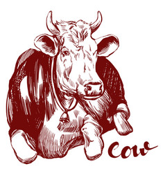cow - domestic animal farm hand drawn vector image vector image