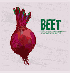 digital detailed red beet hand drawn vector image