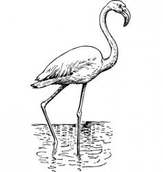 flamingo phoenicopteri vector image