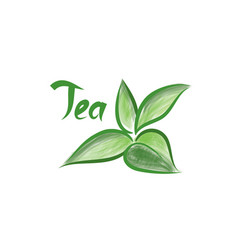 Green tea tree branch herb label with lettering vector