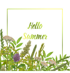 hello summer card with greenery vector image