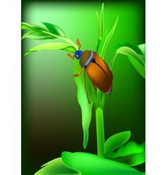 May bug vector image