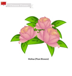 Peony Flowers The National Flower of China vector image