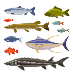 Saltwater and freshwater fishes set fresh aquatic vector
