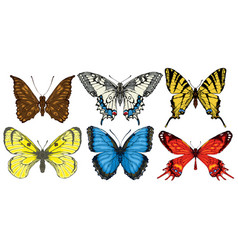 set of various bright colorful butterflies vector image
