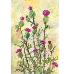 watercolor thistle poster postcard vector image