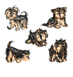 Yorkshire terriers vector image vector image