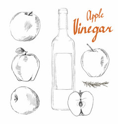 apple cider vinegar vector image