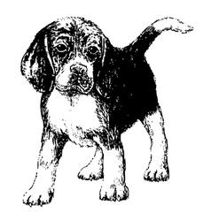 beagle bw vector image
