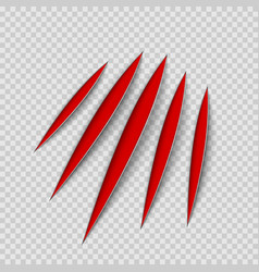red claws animal scratch scrape track cat or vector image